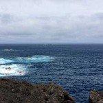 Tauchen auf Madeira, Tauchen im Atlantik, Manta Diving Madeira